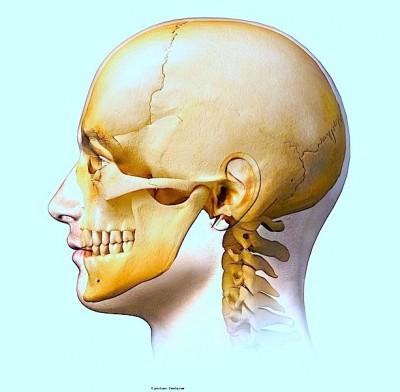 dor na mandíbula, crânio, de lado