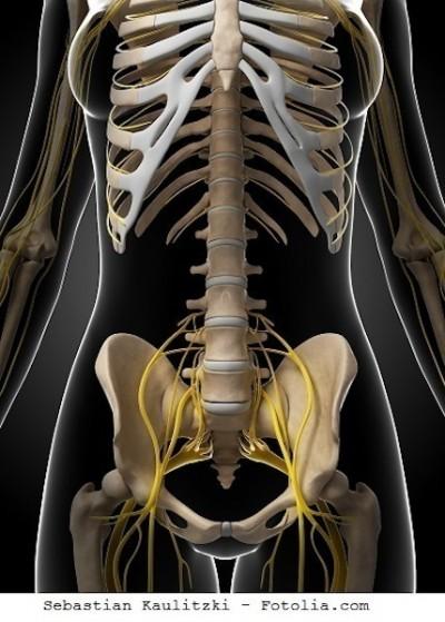 Osso sacro, ligamentos, nervos