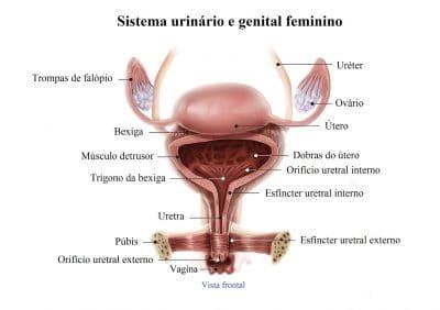 bexiga,uretra,esfíncter