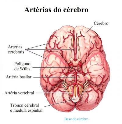 circulação,cerebral,AVC