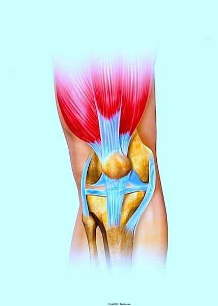 Anatomia do joelho