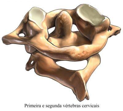 primeira,e,segunda,vértebras,cervicais