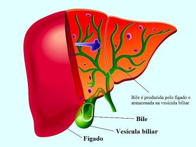 Icterícia,fígado,bile,bilirrubina