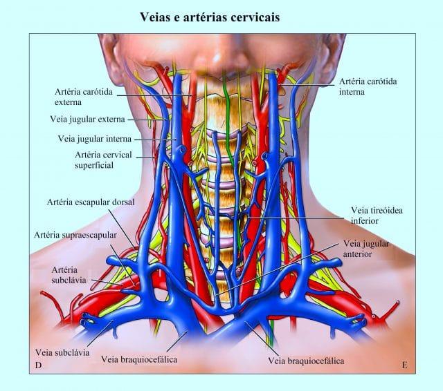 veias,e,artérias,cervicais