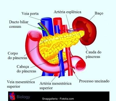 Pâncreas,cabeça, cauda, veia cava, fígado, duodeno