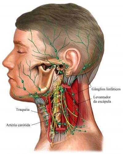 linfonodos,cervicais,inchados