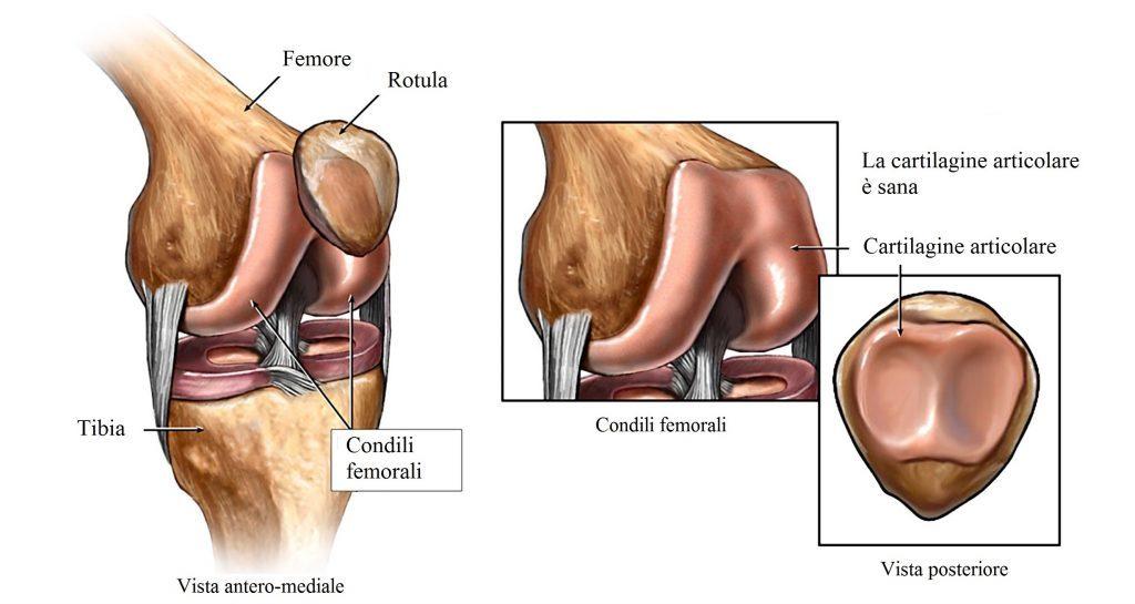 huesos-de-la-rodilla