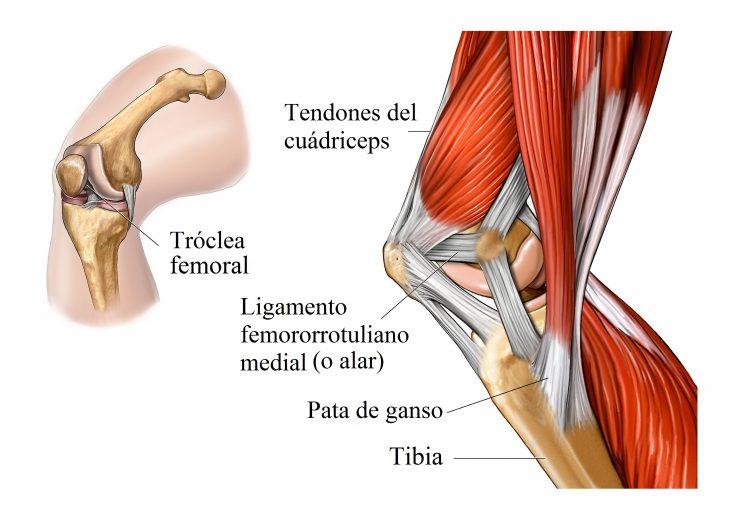 Tendinitis cuadricipital tratamiento ejercicios y - Dolor en la parte interior de la rodilla ...