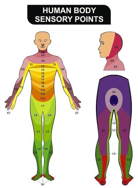 Dermatomas, localización, síntomas, dolor, hormigueo, l2, l3, l4, l5, s1, hernia, protrusión