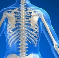 anatomía, cuerpo, dorsal, cervical, lumbar, costal, nervio