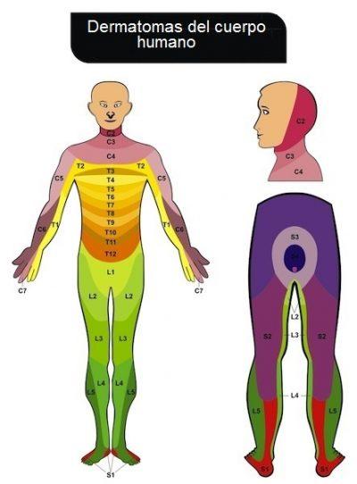 dermatomas del cuerpo humano