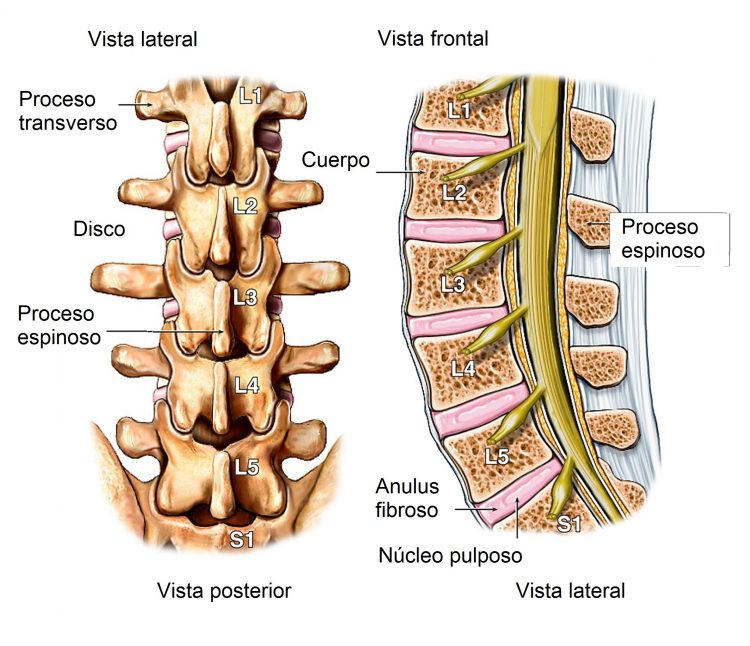 Dolor de espalda baja, intenso, riñones, causas y tratamiento