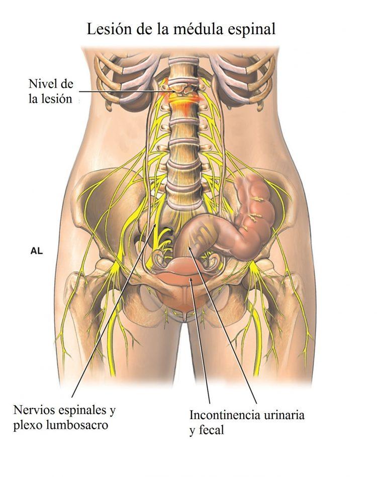 Increíble Receso Lateral Columna Vertebral Anatomía Patrón ...