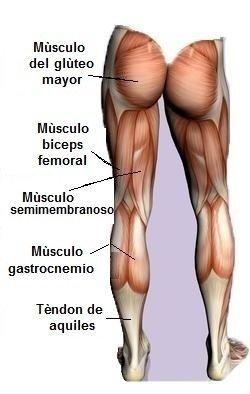 anatomía músculos, posteirori, muslo, semimembranoso, semitendinoso, pantorrilla, achille, glúteo, biceps femoral, deportivos, gimnasio, futbolistas, atletas, voleibol, basket, tenis, ciclismo.