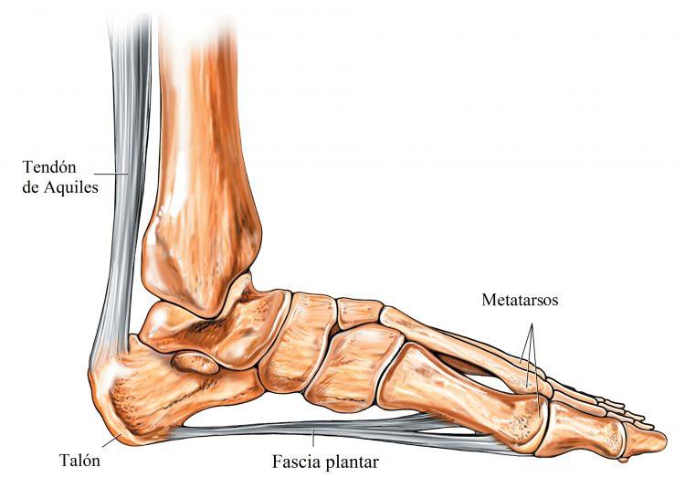 anatomia de pie y tobillo, plantillas ortopedicas
