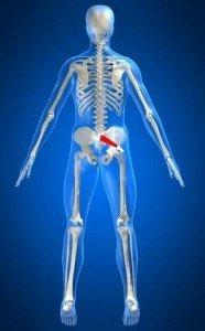 Anatomía músculo piriforme, rotadores, cadera, sacro