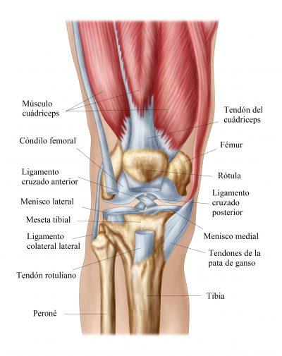 anatomia de rodilla, tendinitis rotuliana