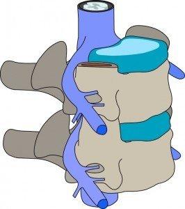 Columna vertebral con disco intervertebral, raíces nerviosas y médula espinal fisioterapia, rehabilitación y reeducación motor