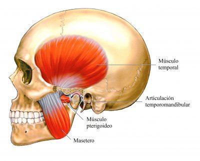 dolor de cabeza de origen muscular