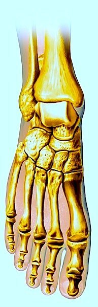 Hallux, valgo, dedo gordo del pie, anatomía, huesos, pie
