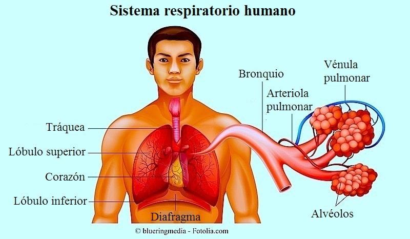 Edema pulmonar agudo, causas, cardiogénico, encharcamiento y tratamiento