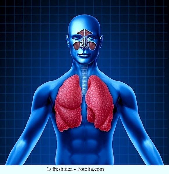 anatomía, pulmonar, sinusitis