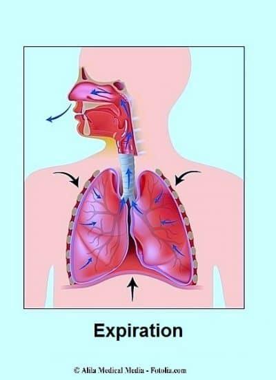 espiración, aire, pulmones.