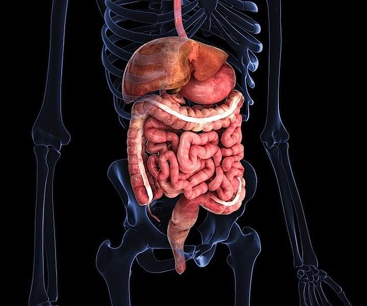 intestino,giardia