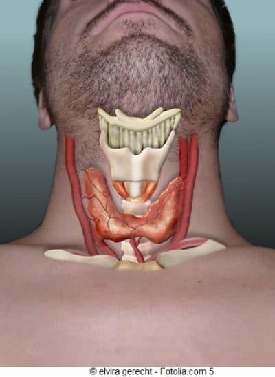Tratamiento para el hipotiroidismo, metabolismo, lento, engordar, tiroides, glándula