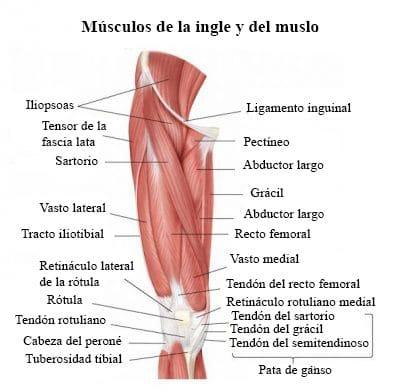 Dolor en la ingle, derecha, al caminar, embarazo, mujer, hombre y pierna