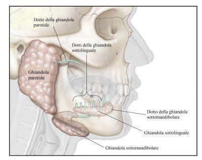 ghiandole-salivari-parotide-400x317