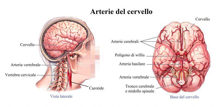 arterie-del-collo-e-del-cervello-768x374