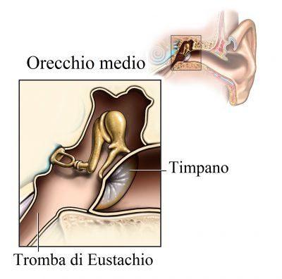 Oído interno, el martillo, yunque, estribo,