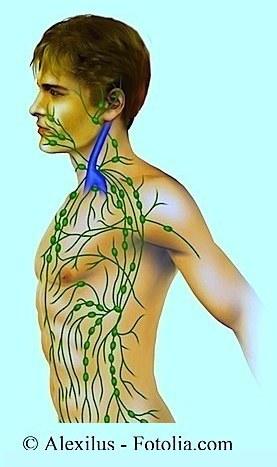 ganglios linfáticos, cuello, tórax