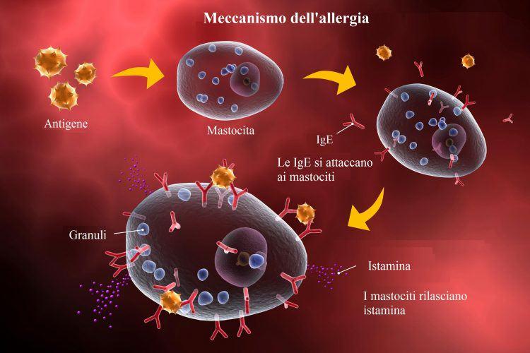 alergia-inflamación