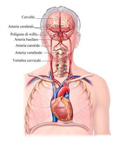 arterias-carótidas-cerebrales-y-vertebrales