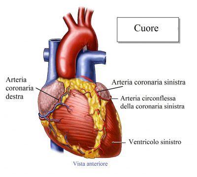 corazón-coronarias