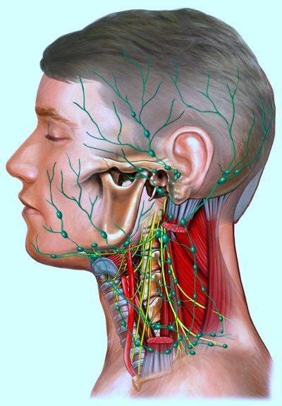 Ganglios linfáticos del cuello hinchados, inflamados, doloridos ...