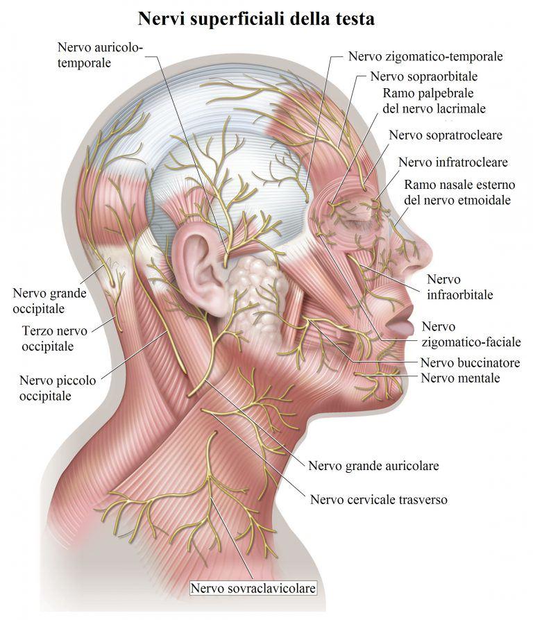 nervis-cara-cabeza