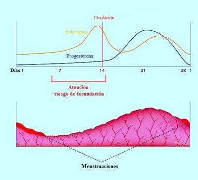 retraso-mentruaciones-estrogenos-progesterona