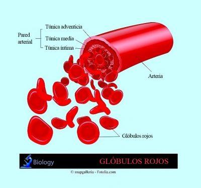 Hematocrito bajo, glóbulos rojos