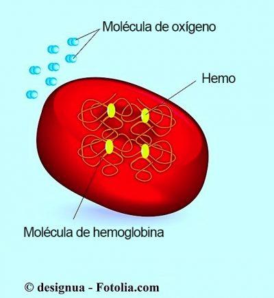 glóbulos rojos, hemoglobina
