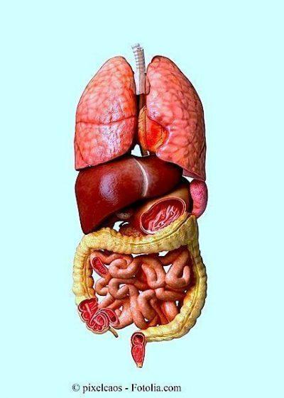 Intestino