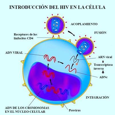 acción, virus, VIH, SIDA, infección, célula