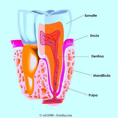 Limpieza dental o ablación dental