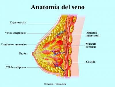 Anatomia del seno, mastitis