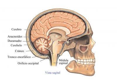 anatomia del cerebro, metastasis en los linfonodos