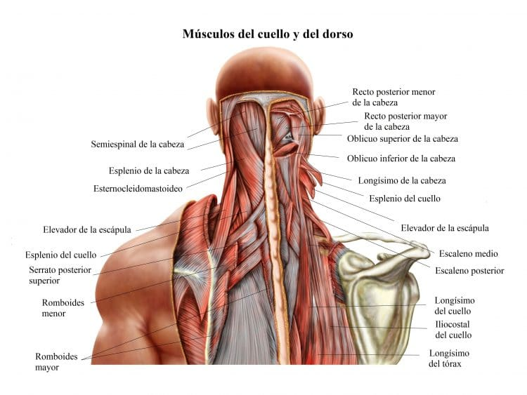 Si la osteocondrosis al embarazo el tratamiento