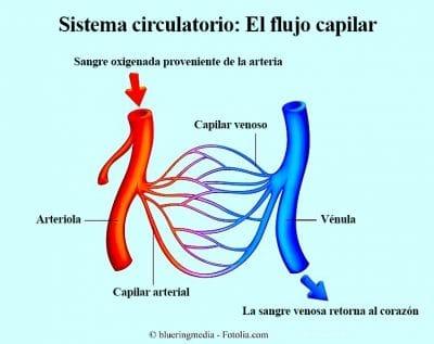 Circulación, presión alta