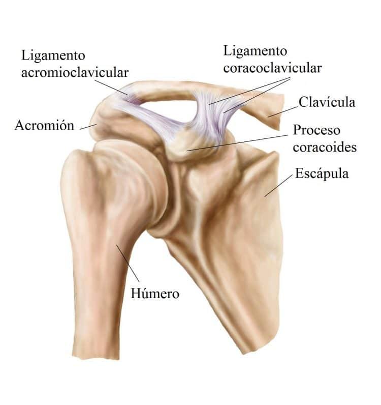Único Hombro Dislocación Anatomía Inspiración - Imágenes de Anatomía ...